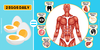 10 Things That Happen When You Eat Two Eggs A Day