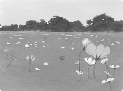 A sketch of a field of flowers, with the local values established.