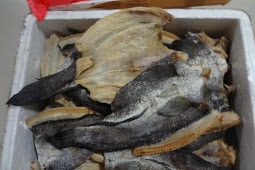 Kami menyediakan ikan gabus asin kering asin 95% kering dan high quality