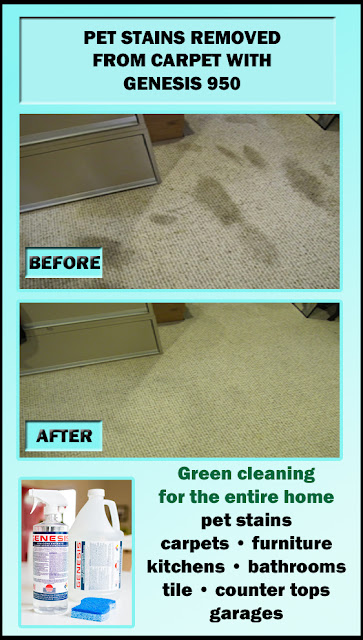 Best Pet Stain Remover for carpet