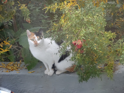 γατα σε κήπο