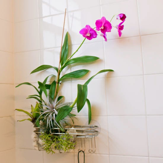 The Rainforest Garden Turn A Shower Caddy Into A Vertical
