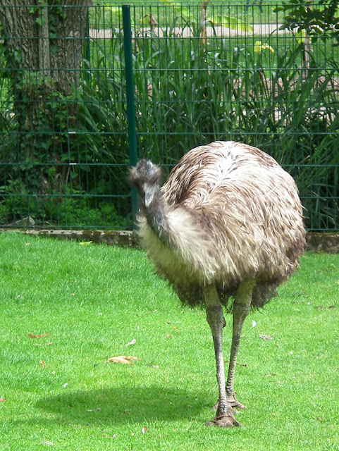 Emu in the botanic gardens in Tours.  Indre et Loire, France. Photographed by Susan Walter. Tour the Loire Valley with a classic car and a private guide.