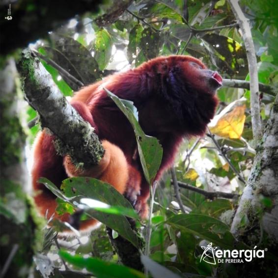 Animales y plantas que enriquecen nuestros paisajes