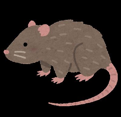ドブネズミのイラスト