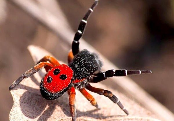 #10 Most Common Phobias And Their Meanings