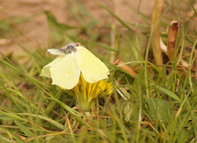 brimstone in flight