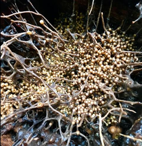 Milea Bee Farm: The Hidden Honeypot of Batangas