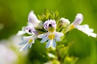 Obat Floaters Mata, 100% Herbal Dan Terbukti Ampuh Untuk Semua Usia
