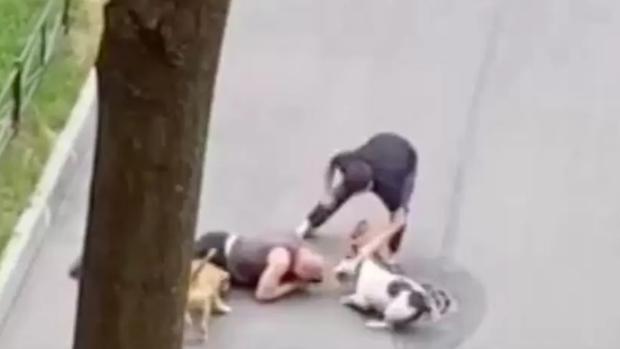 Hombre cubre con su cuerpo a su perro para defenderlo