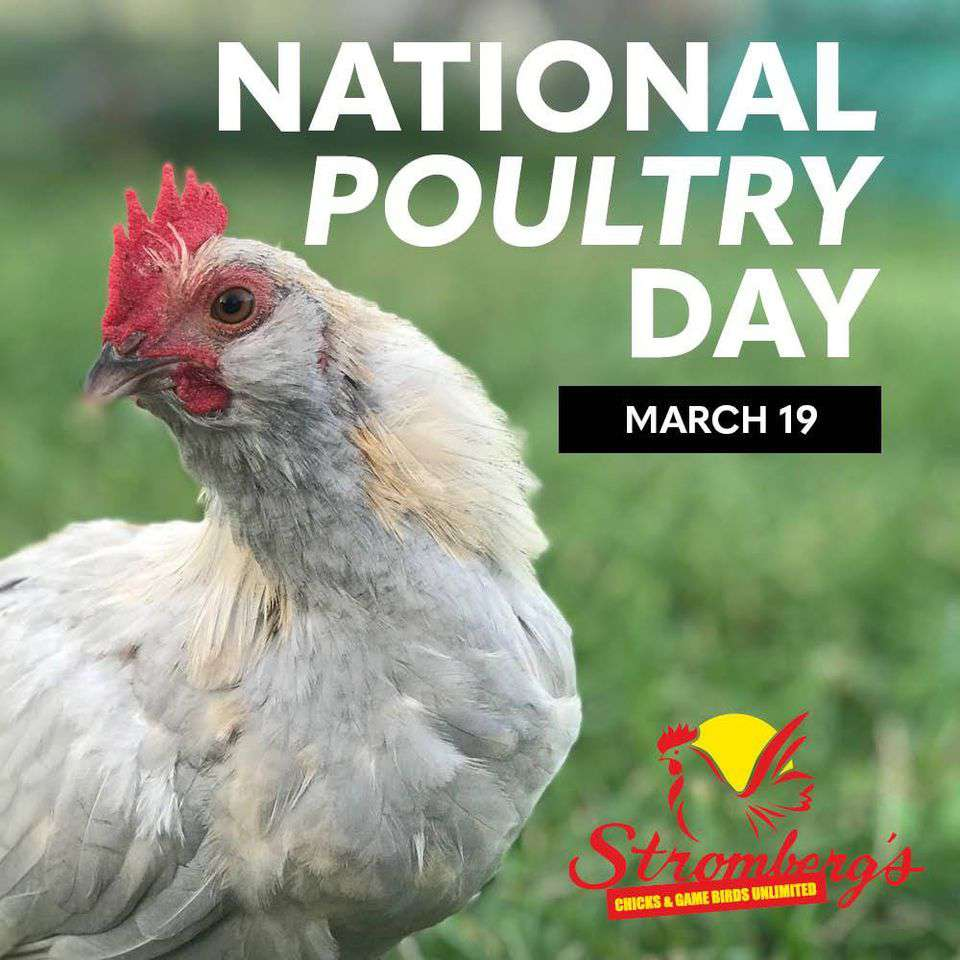 National Poultry Day Wishes Awesome Images, Pictures, Photos, Wallpapers