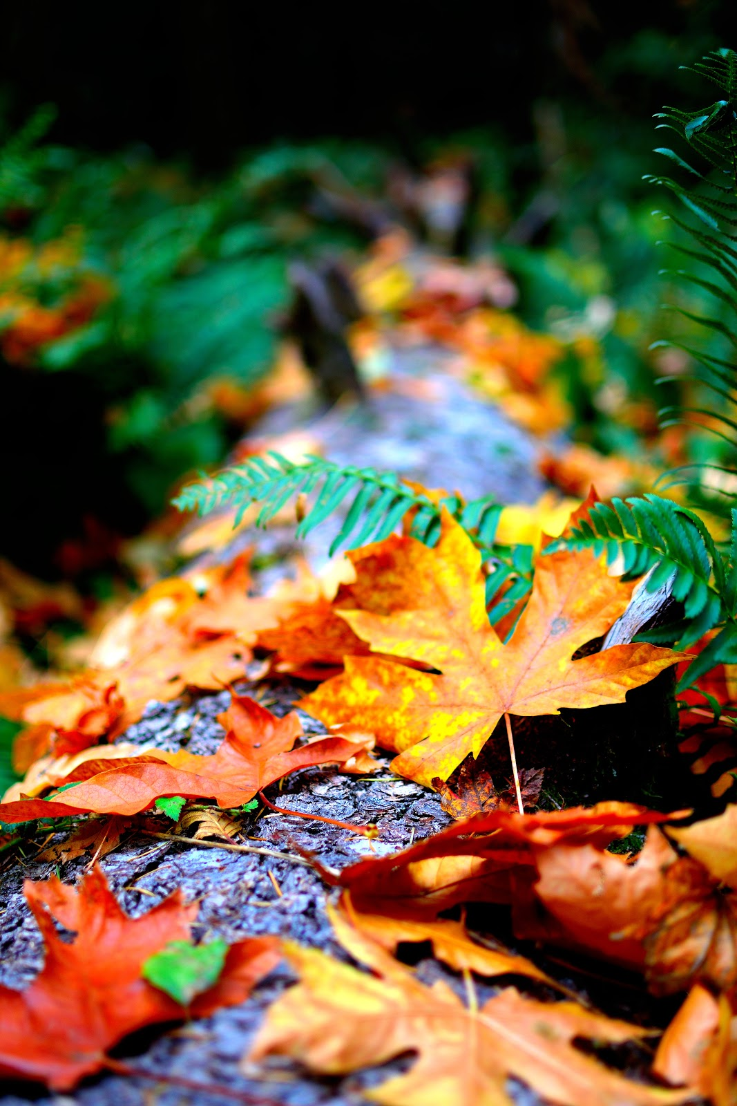 4k Wallpaper Autumn Leaves Blur Close Up Photo of Dry Leaves