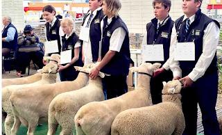 Έγραψαν 15 πρόβατα ως μαθητές σε σχολείο γιατί κινδύνευε να κλείσει