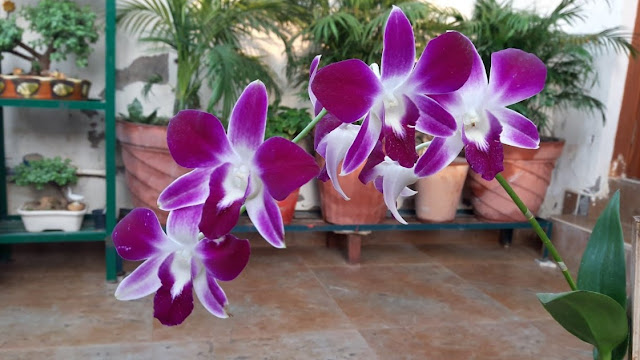 How To Plant Orchids In Pots