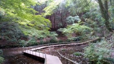 道保川公園 遊水地