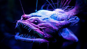 O peixe diabo negro (Melanocetus johnsonii)