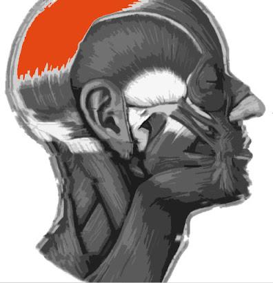 Imagen resaltada del Galea aponeurótica