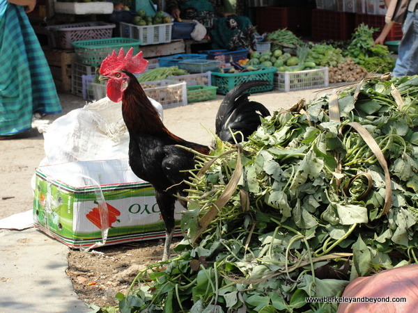 rooster at town market in Labuan Bajo on Flores Island in Indonesia