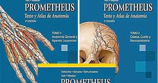 Apuntes de Medicina: Prometheus: Texto y Atlas de Anatomía