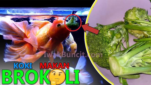 Ikan Mas Koki Makan Sayur Brokoli? Memang Apa Manfaatnya? 🤔