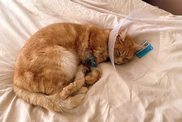 Poes geopereerd kap