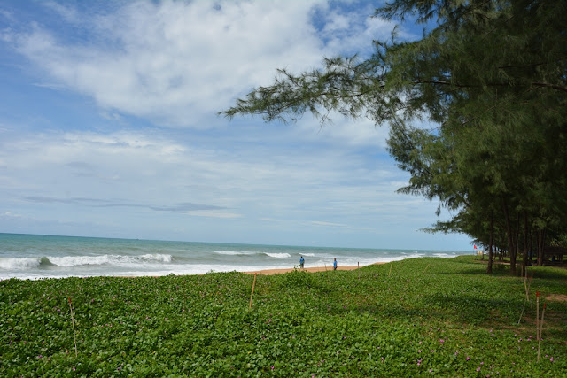 Mai Khao Beach green