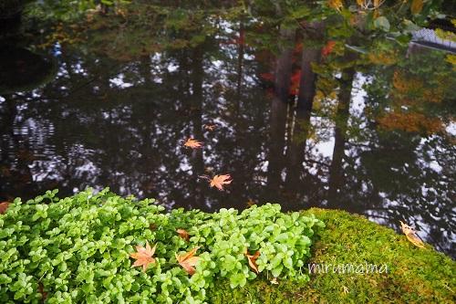教算坊の池