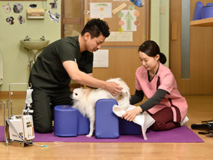 massagem veterinária