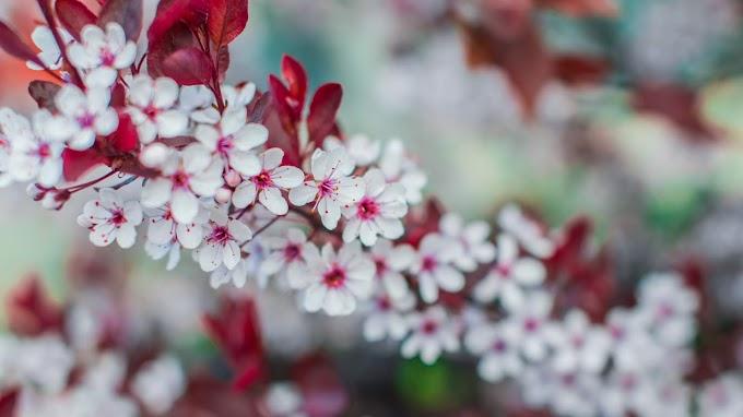 Flores, Ramo, Primavera, Natureza