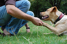 exercício de contato com cães