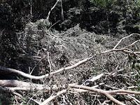 Pokdarwis Jatibaru Barat Sosialisasi tentang Kelestarian Hutan