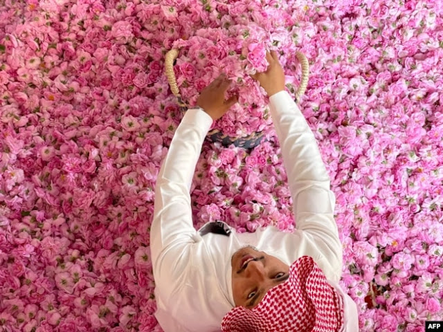 Ramadhan 2021 di Taif, Musim Panen Mawar