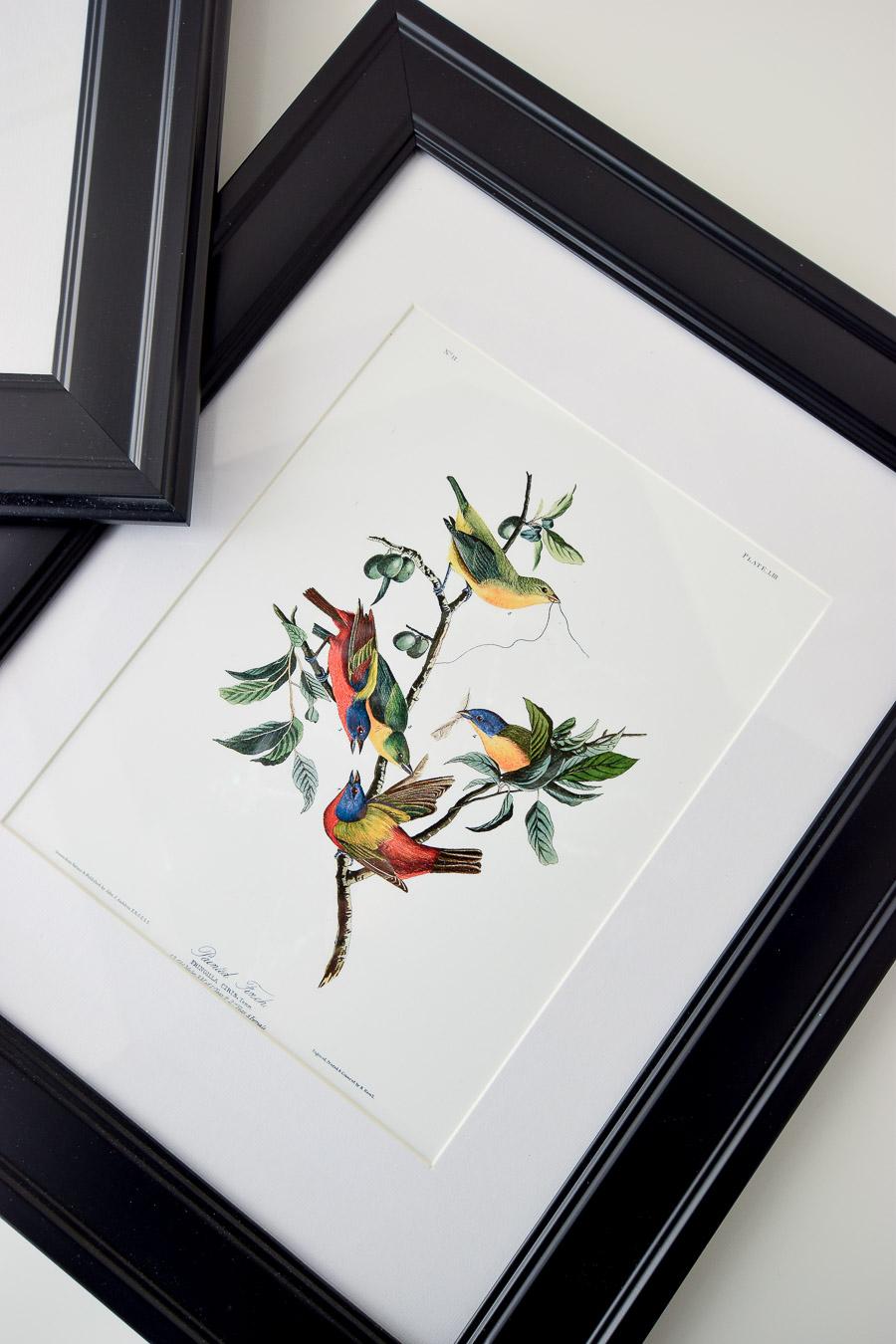 Free audubon botanical bird printables that look gorgeous when framed as wall art.