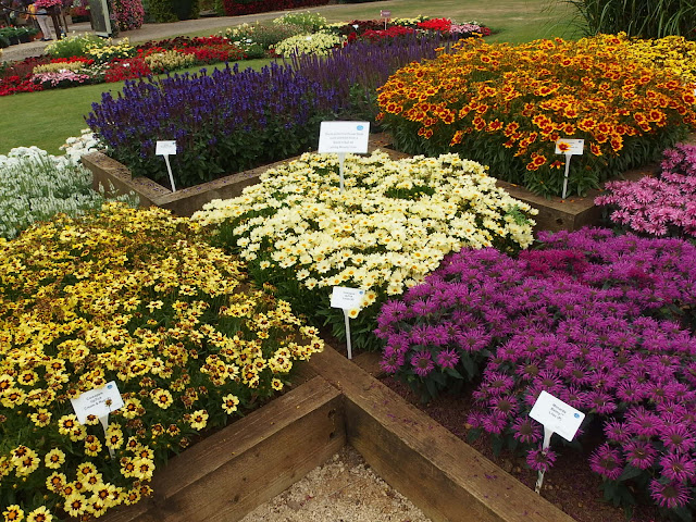 Even on a dull, coolish day these flower beds were alive with bees
