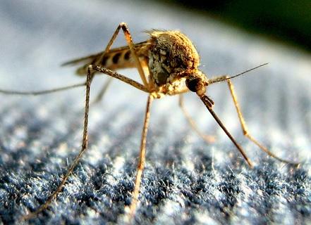 Repelente contra insectos