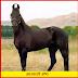 Main breeds of Indian horses - जानिये भारतीय घोड़ों की मुख्य नस्लें