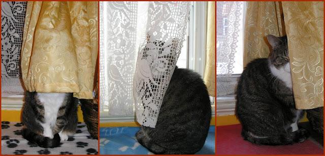 hommage à mon chat