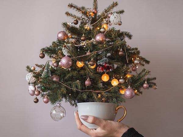358. Moja pierwsza żywa choinka i ozdoby świąteczne