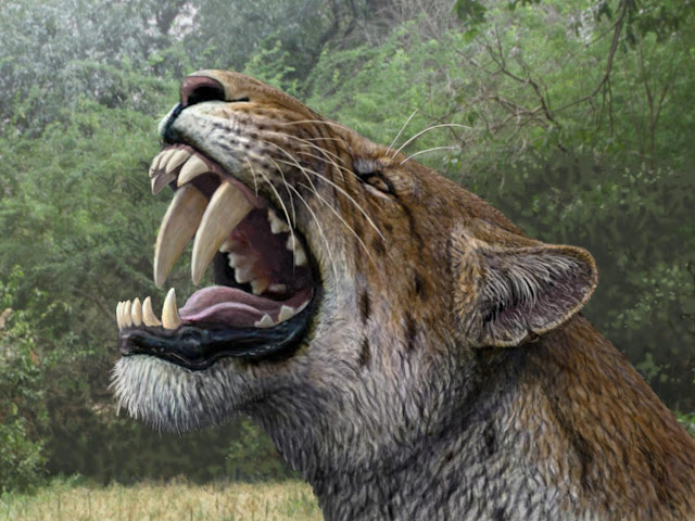 Almost complete skull of saber-toothed cat discovered in Schöningen