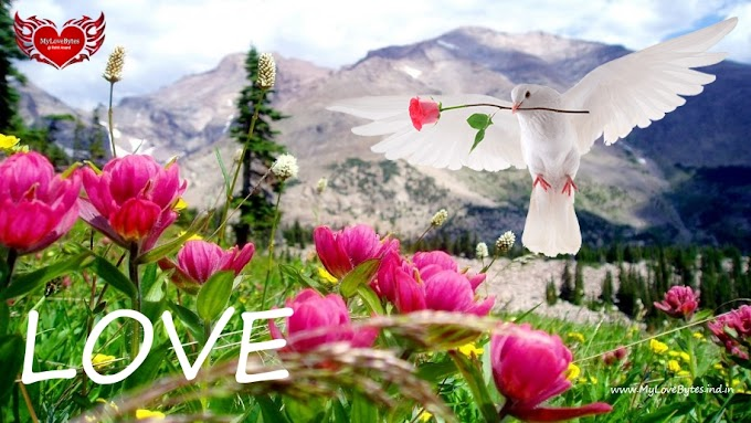 Love Wallpapers Romantic Backgrounds 4K UHD for Computer & Ipad