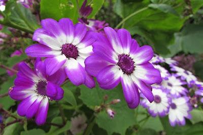Jenis Jenis Bunga Dan Cara Penyerbukannya Mastimon Com