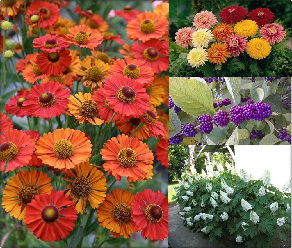 10 Beautiful Fall Flowers And Plants For Your Garden