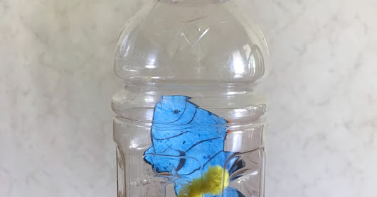 Water Bottle Aquarium