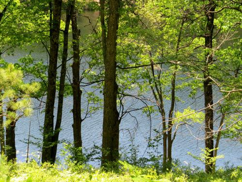 Condon Lake