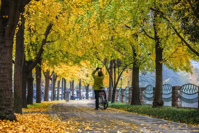 Autumn in Beijing (China)