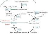 यूरिया साइकिल डिसआर्डर , आनुवंशिक बीमारी,USD