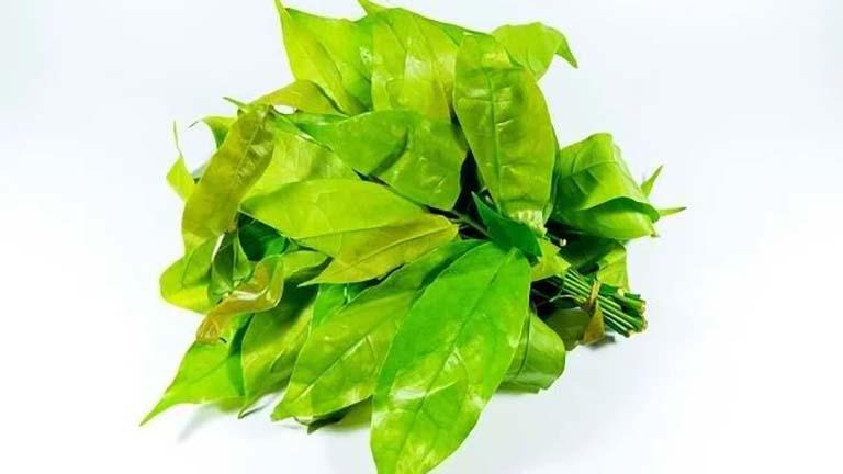 daun melinjo obat asam urat gula darah