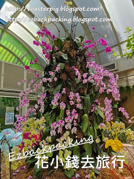 香港動植物公園蘭花