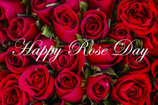 Rose Day- Excellent Start of Valentine's Week
