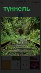 Старые и ржавые рельсы ведут в туннель, который практически зарастает зелеными насаждениями